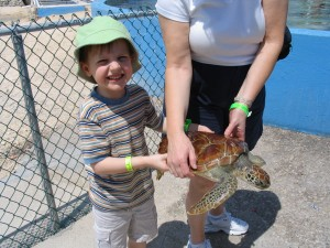 Young boy holding turtle